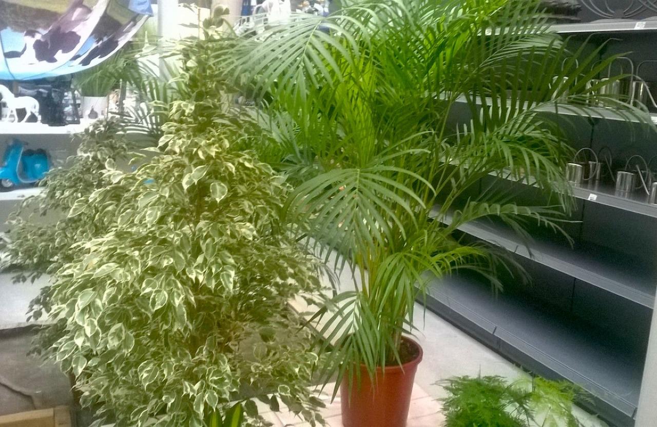Plantes d appartement for Plantes vertes appartement